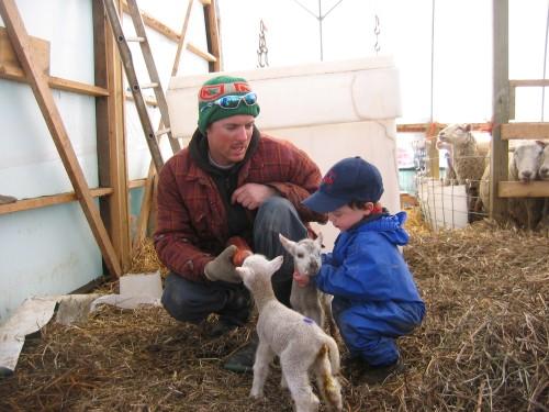 Kids love lambs